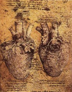 Heart and its Blood Vessels, Leonardo da Vinci